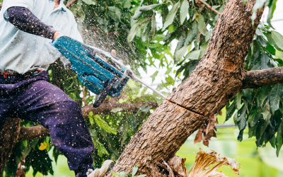 $50 Off Tree Service for Seniors